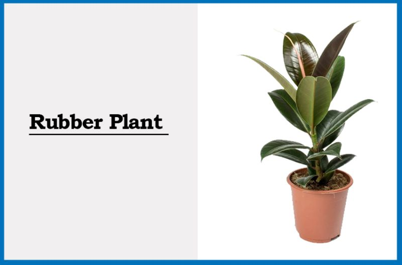 5 Common Houseplants that You Might not Know are Air Purifiers